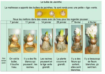 french immersion alberta documentation